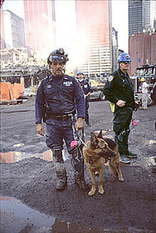 NYPD Appollo rescue dog