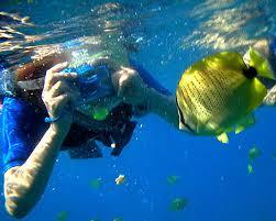 snorking in Honolulu