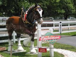 budweiser-horse