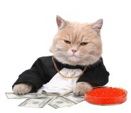 Money Cat